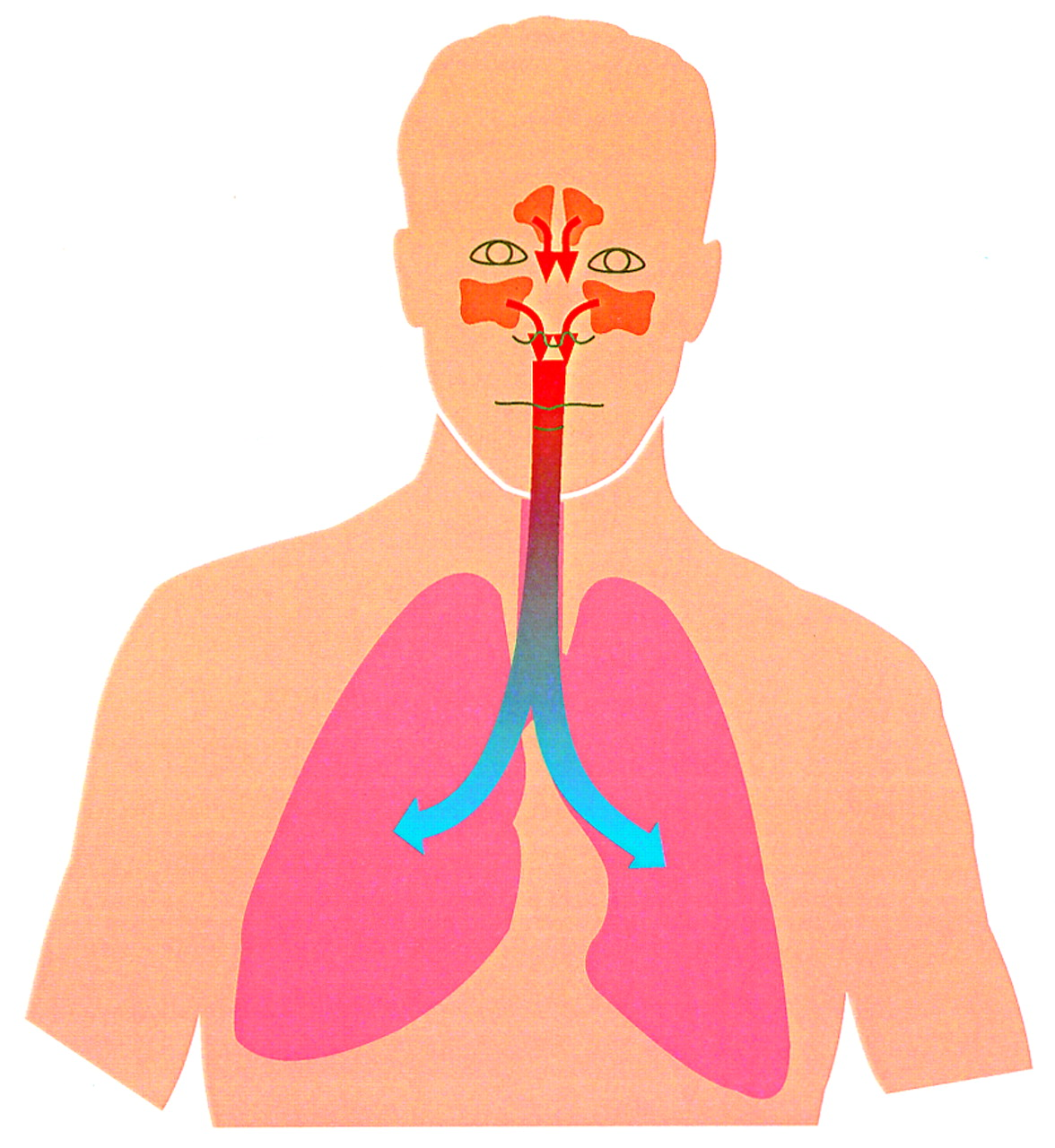 Nasal nitric oxide in man | Thorax