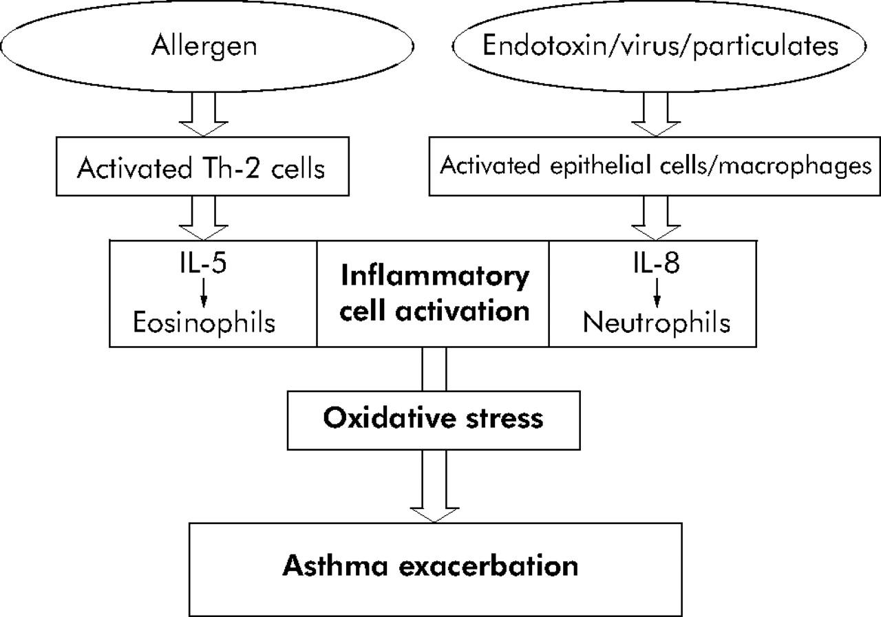 HESI Case Studies: Pediatrics - Asthma Example   Graduateway