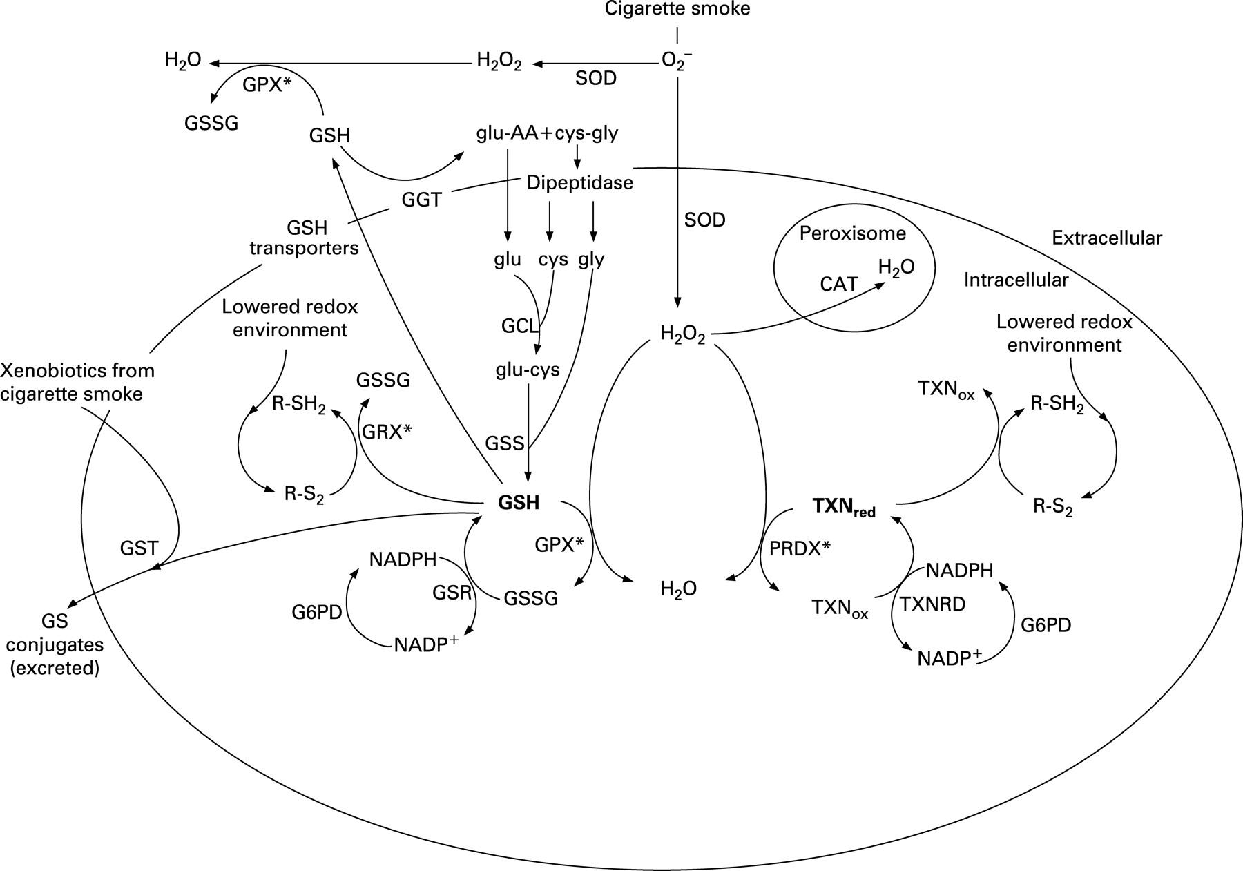 Genetic variati... Gamma Glutamyl Transferase