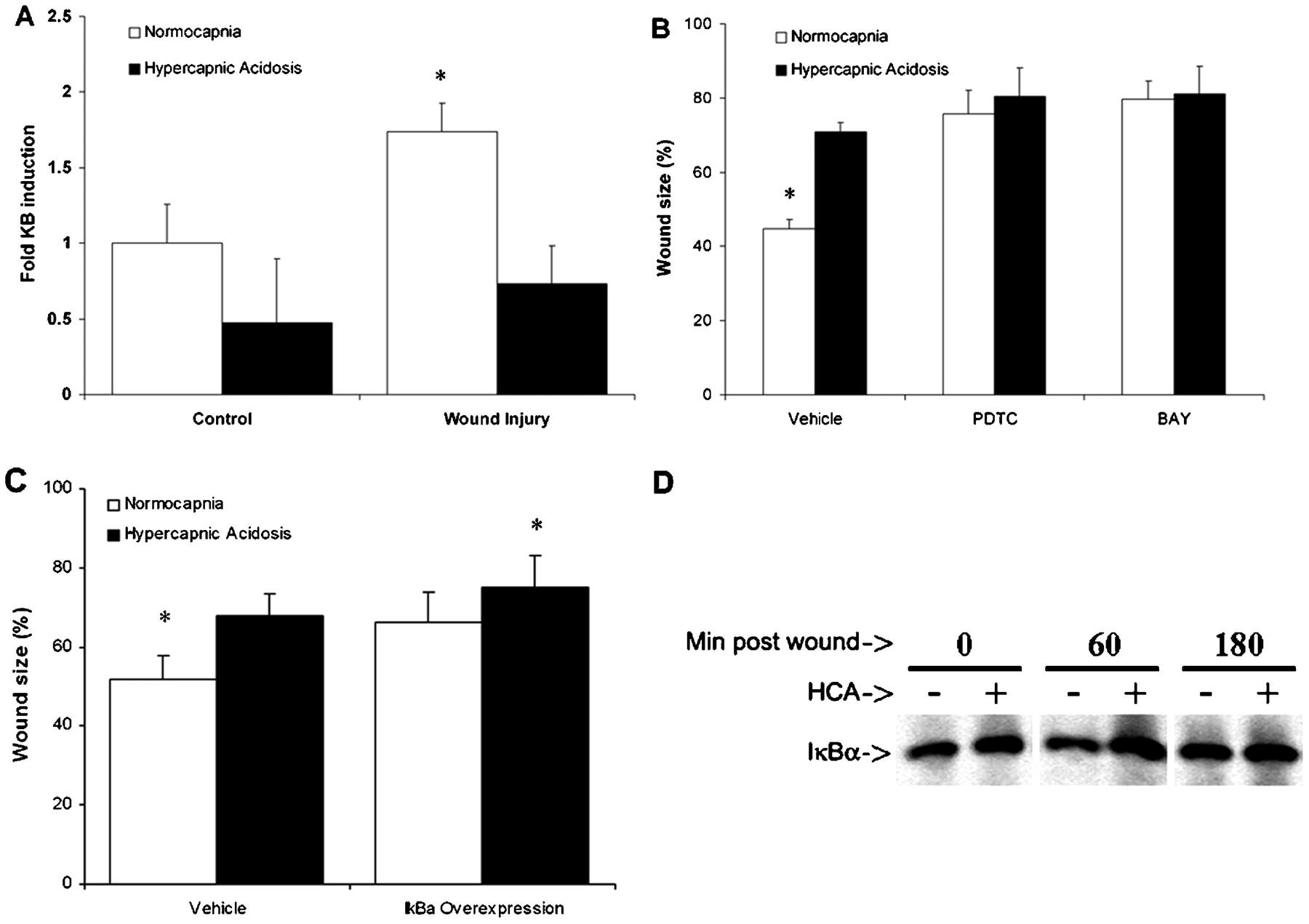 Hypercapnic acidosis attenuates pulmonary epithelial wound