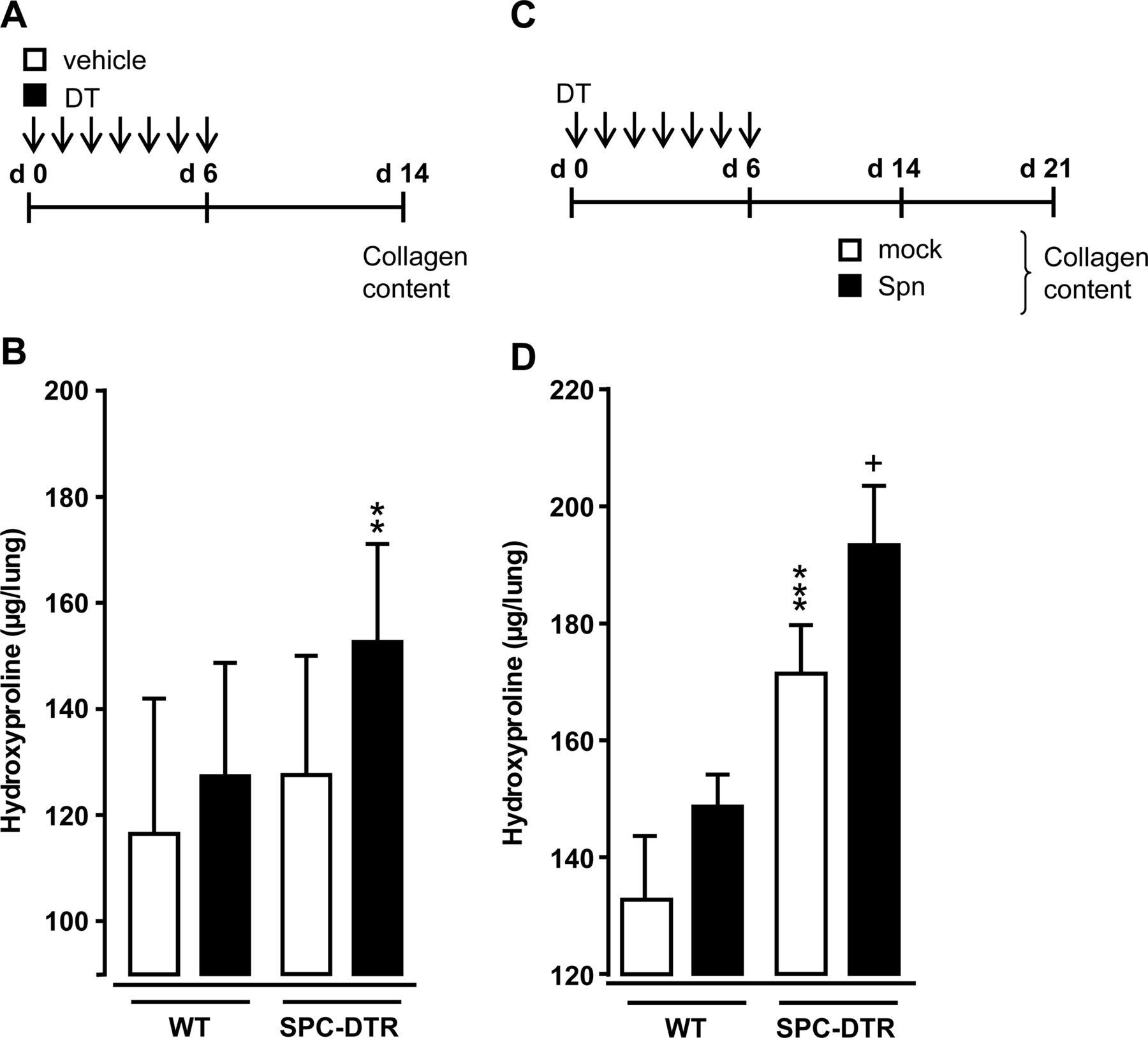 Streptococcus pneumoniae triggers progression of pulmonary fibrosis