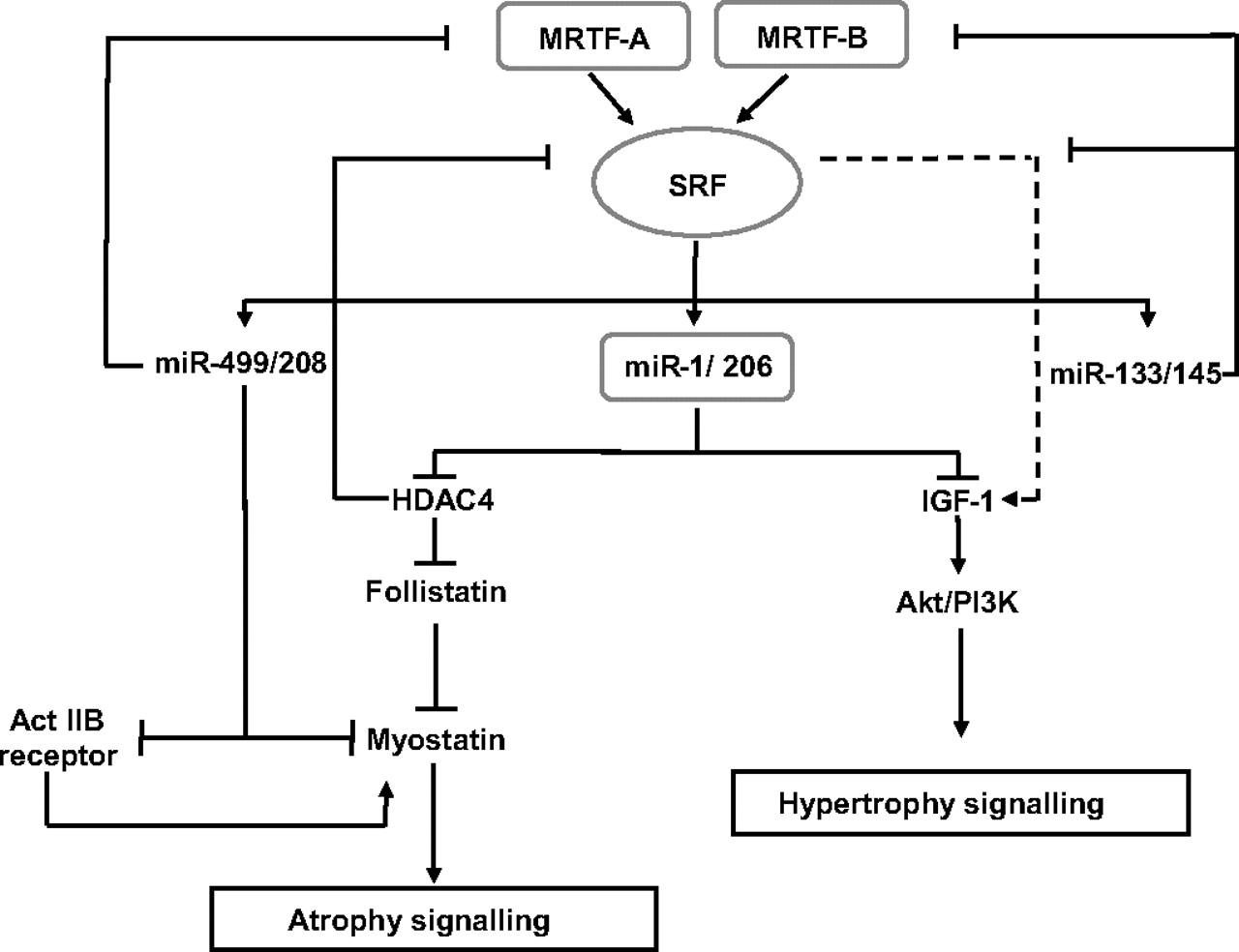 relationship between transcription factor and enhancer