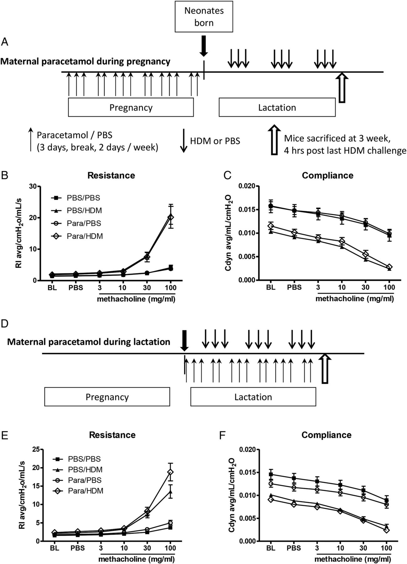 Perinatal paracetamol exposure in mice does not affect the