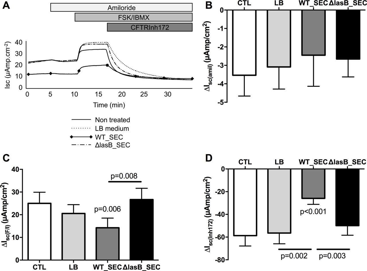 Pseudomonas aeruginosa LasB protease impairs innate immunity in mice