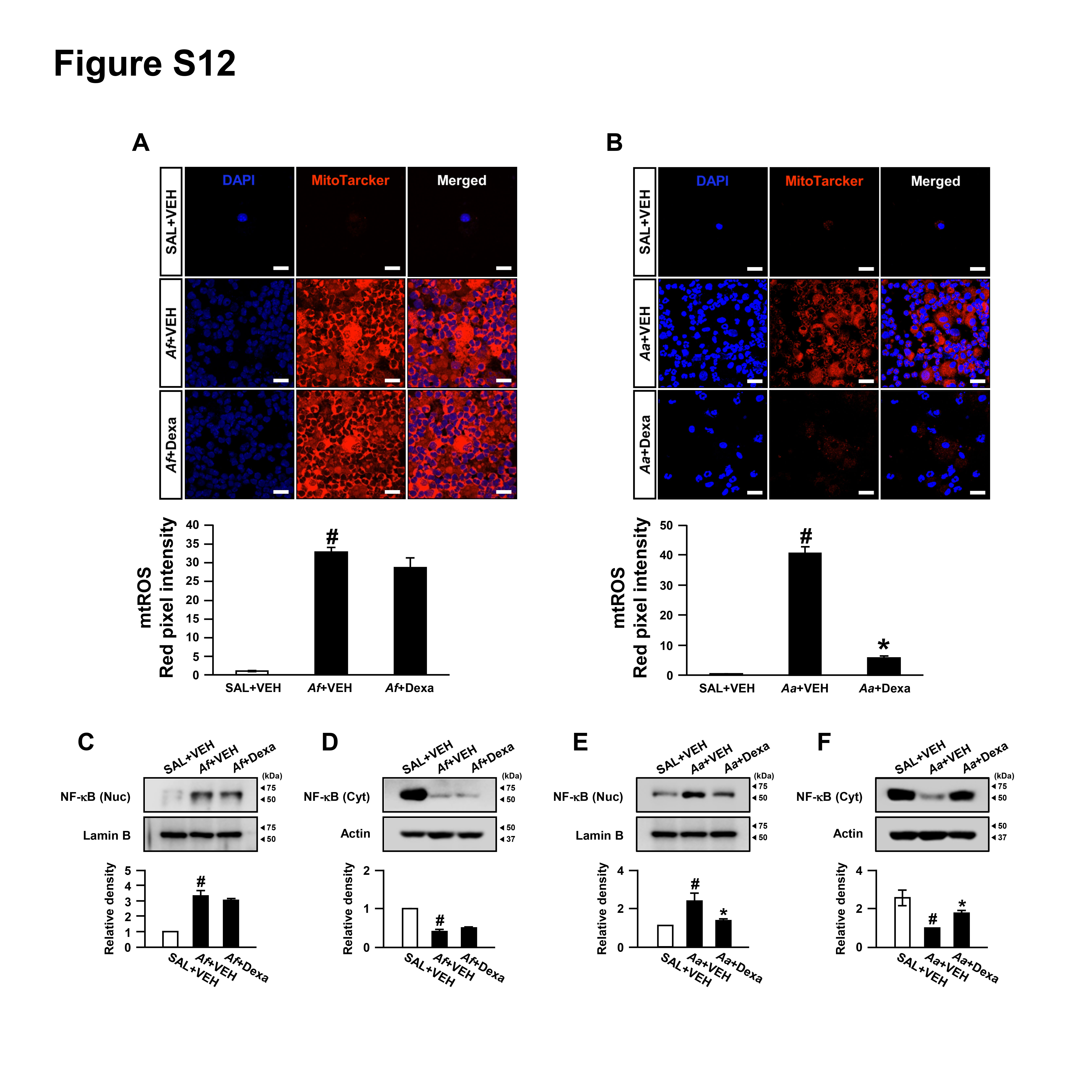 Airway Epithelial Phosphoinositide 3 Kinase δ Contributes To The