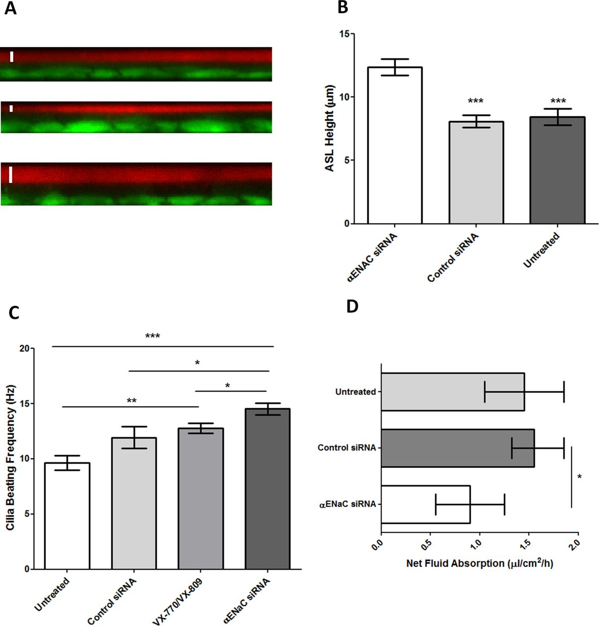 Effective Silencing Of Enac By Sirna Delivered With Epithelial Different Types Shortcircuits Sc As Outlined In Figure 41 Download