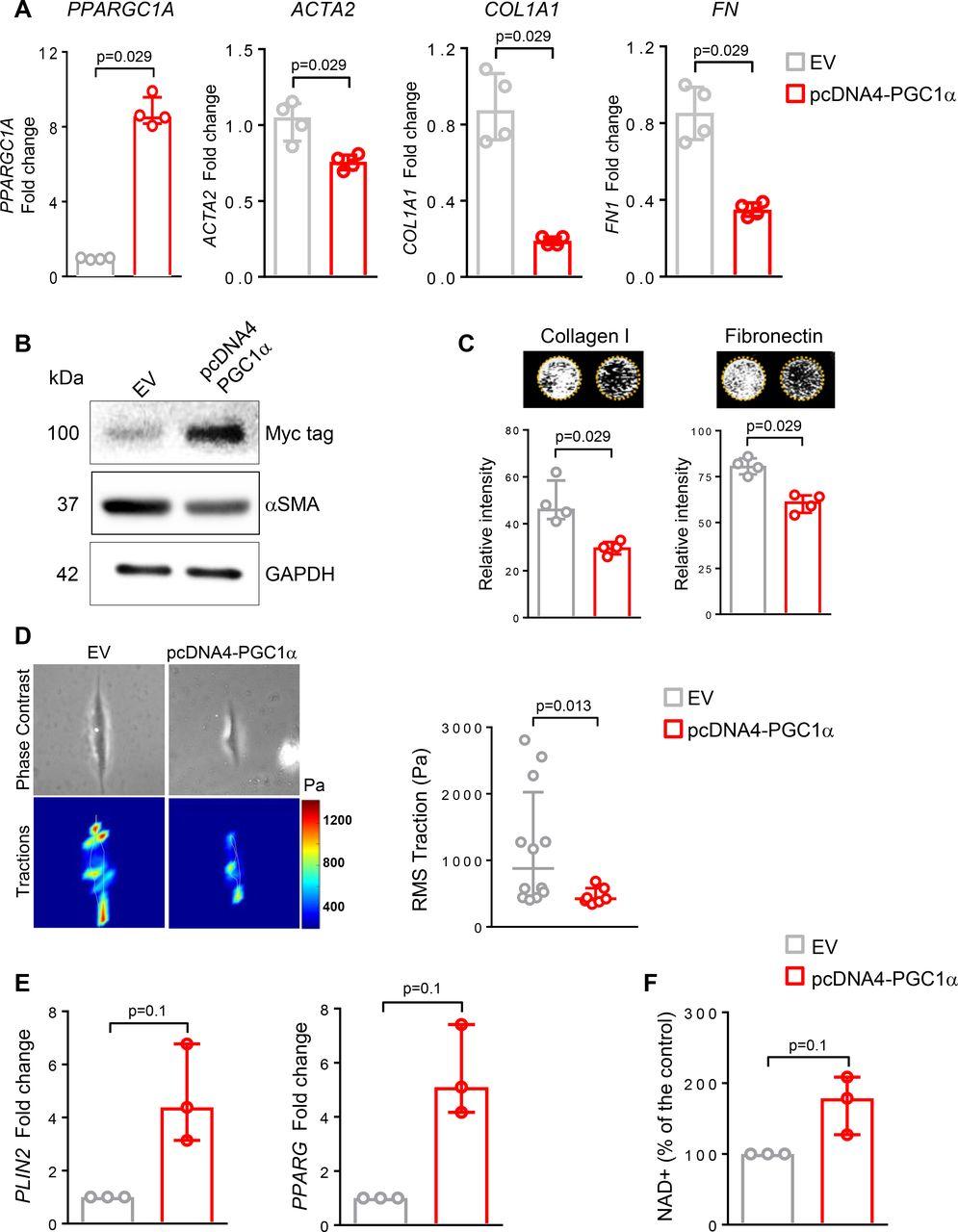 PGC1α repression in IPF fibroblasts drives a pathologic metabolic